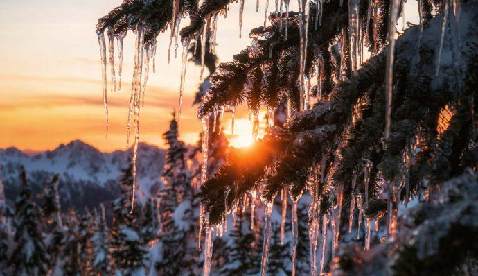 icicles on pine trees