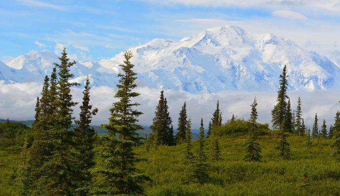 An image of Denali with trees in the foreground